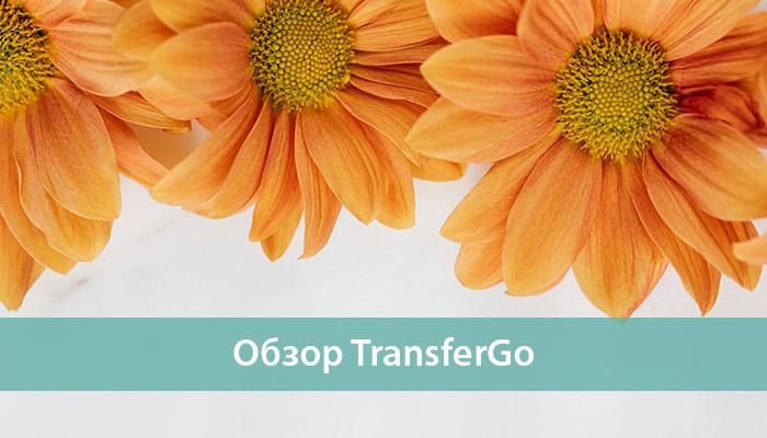 обзор TransferGo