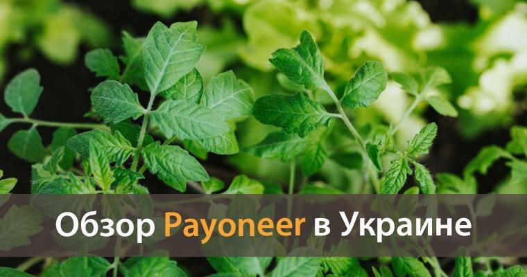 payoneer украина